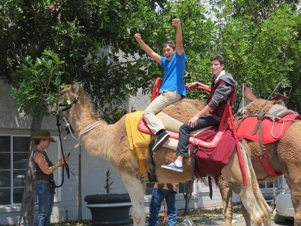 GIDDY-UP: Sophomore Daniel Shoham and junior Shlomo Bijou rode camels on Yom Haatzmaut.