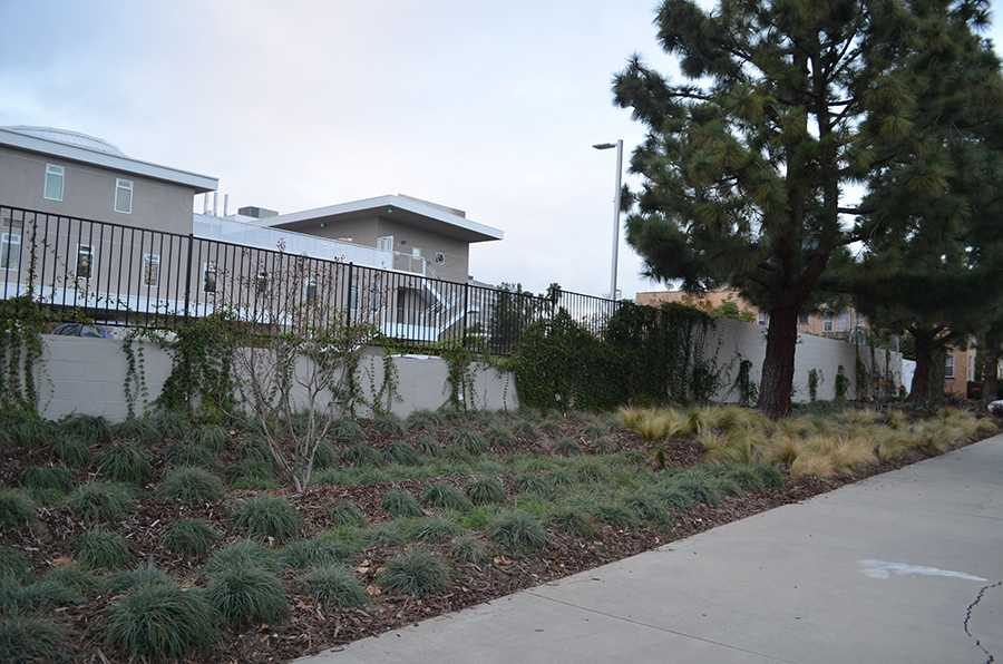 PRETTY: New landscaping behind the school features grasses and an irrigation channel.