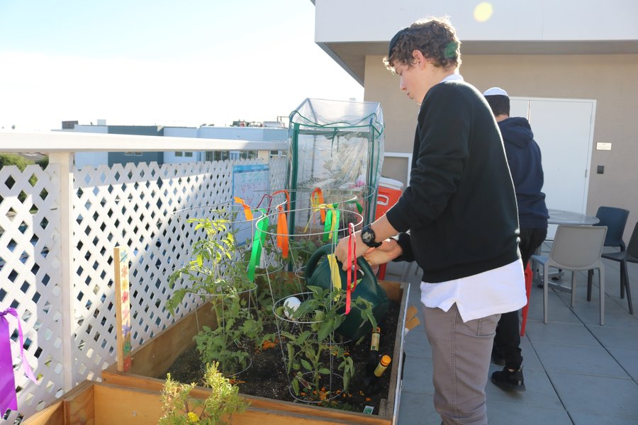 Sophomore+Josh+Weindling+watered+the+tomato+plants.+The+garden+is+on+the+roof+along+the+east+wall%2C+where+a+lattice+fence+runs+from+the+college+counseling+office+to+the+outdoor+stairwell.