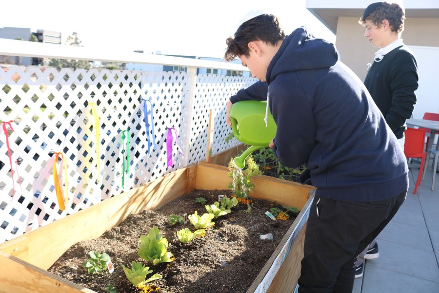 Sophomore+Ben-Tsion+Oliel+watered+lettuce.+Green+Team+leader+Maia+Zelkha+says+there+project+has+no+shortage+of+volunteers.